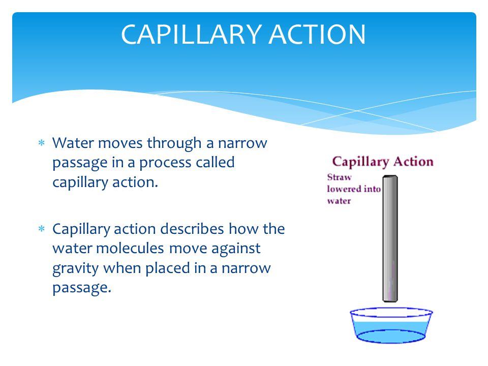 CAPILLARY ACTION Water moves through a narrow passage in a process called capillary action.