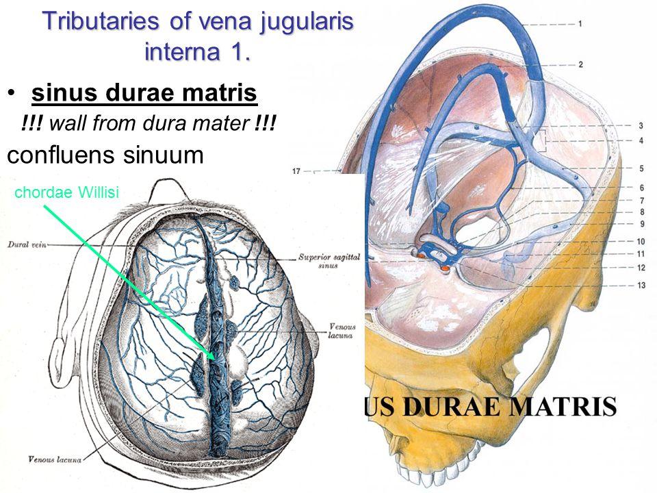 Tributaries of vena jugularis interna 1.