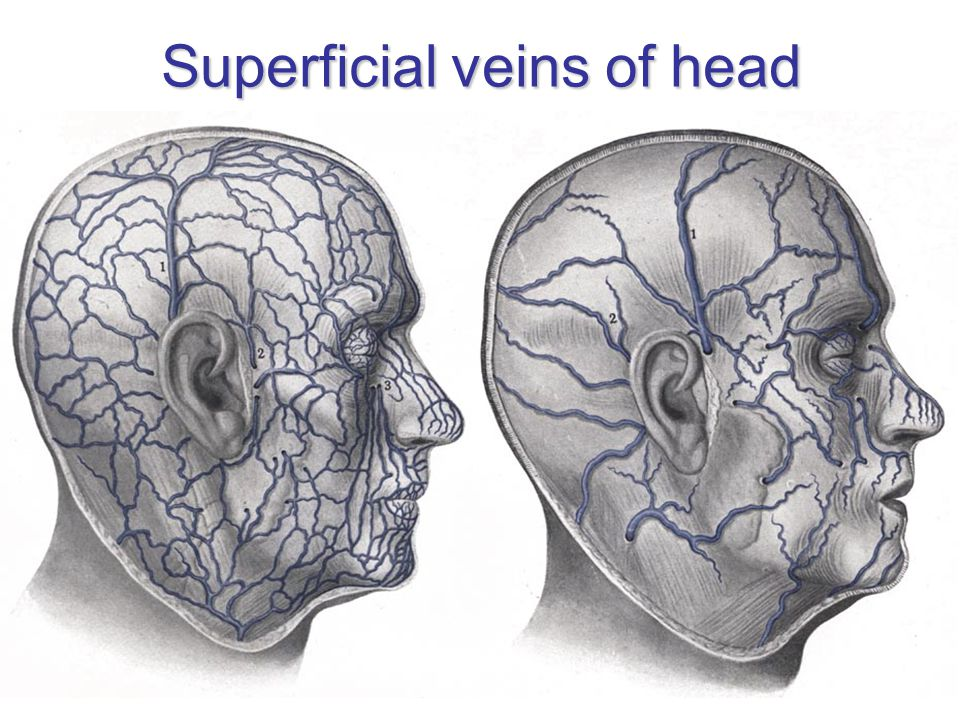 Superficial veins of head