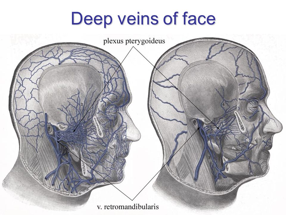 Deep veins of face