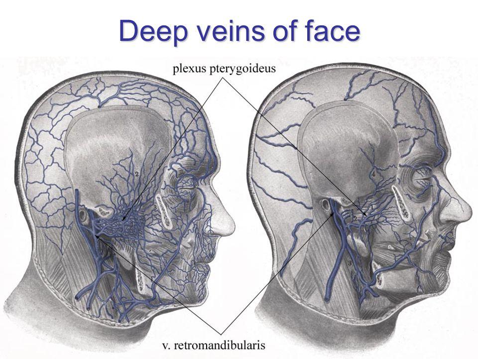 Deep veins of face