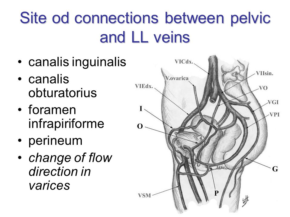 Site od connections between pelvic and LL veins