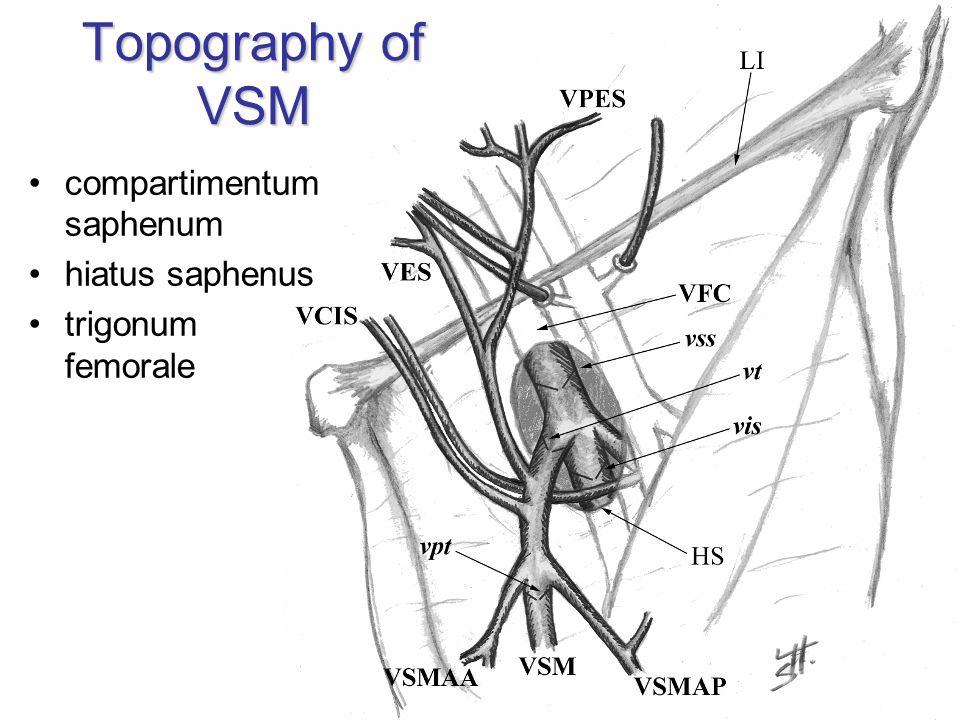 Topography of VSM compartimentum saphenum hiatus saphenus