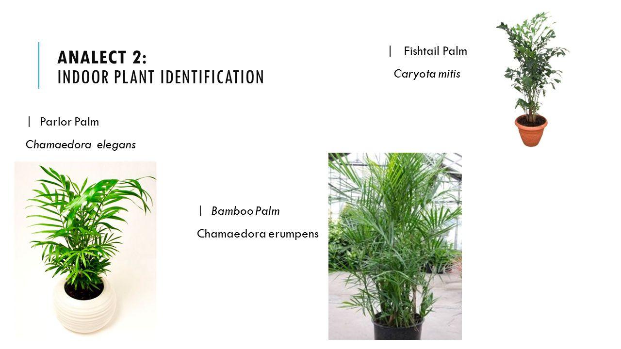Indoor tropical plants identification