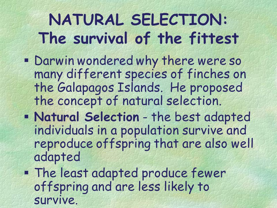 Why Is Natural Selection Not Survival Of The Fittest
