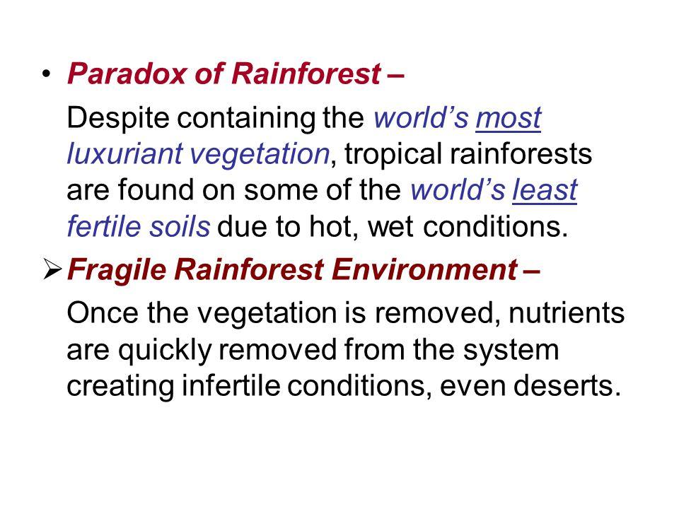 Paradox of Rainforest –