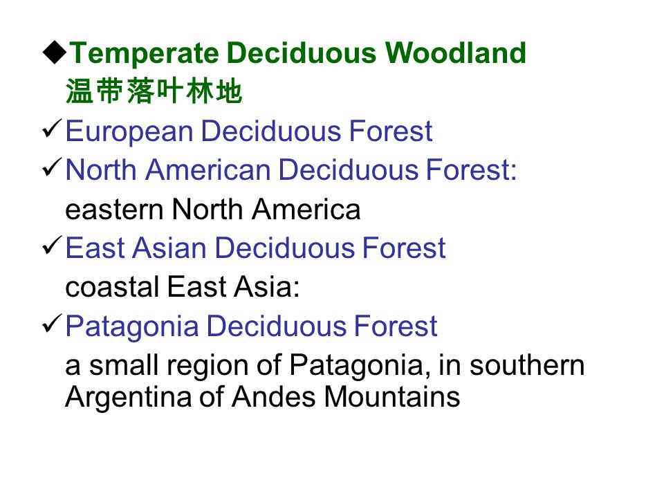 Temperate Deciduous Woodland