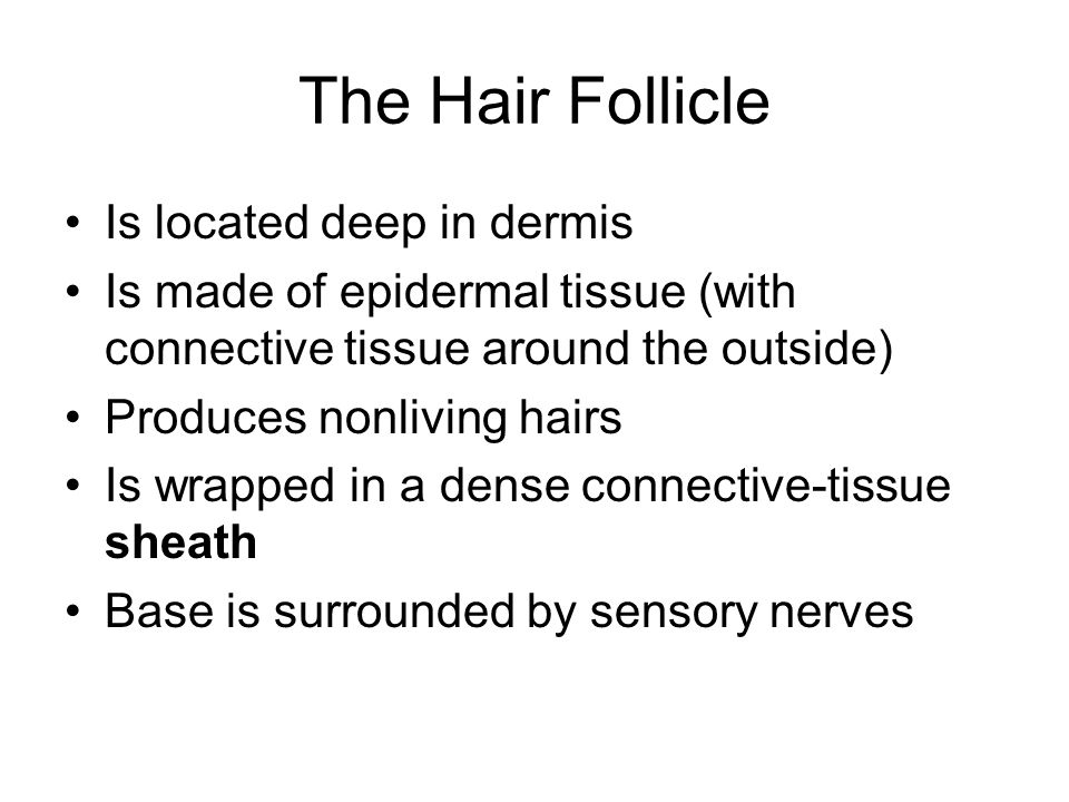 The Hair Follicle Is located deep in dermis