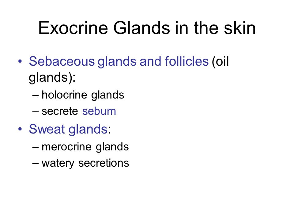 Exocrine Glands in the skin