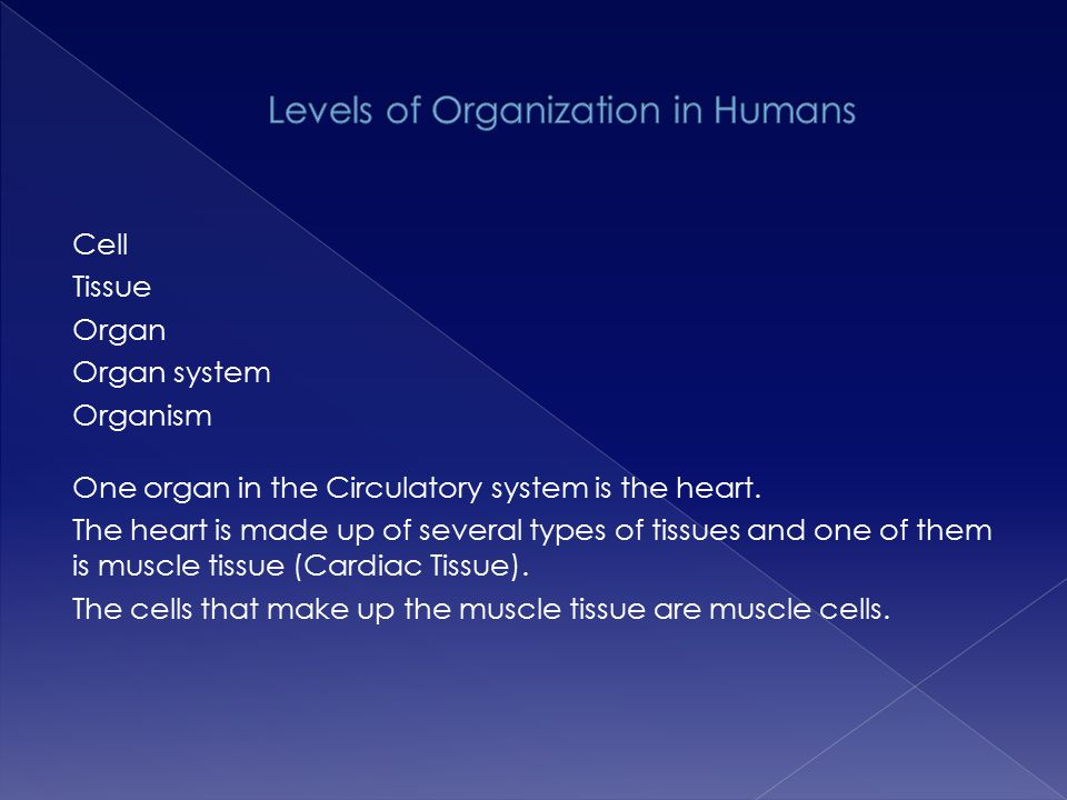 organisation of the circulatory system The lymphatic system aids the immune system in removing and destroying here it enters the venous circulation as plasma and continues in the circulatory system.