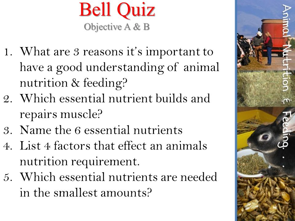 understanding nutrition midterms quiz Free essay: text: understanding nutrition: 9th, 10th, 11th, or 12th ed whitney/rolfes course description and content: incorporates principles of human.
