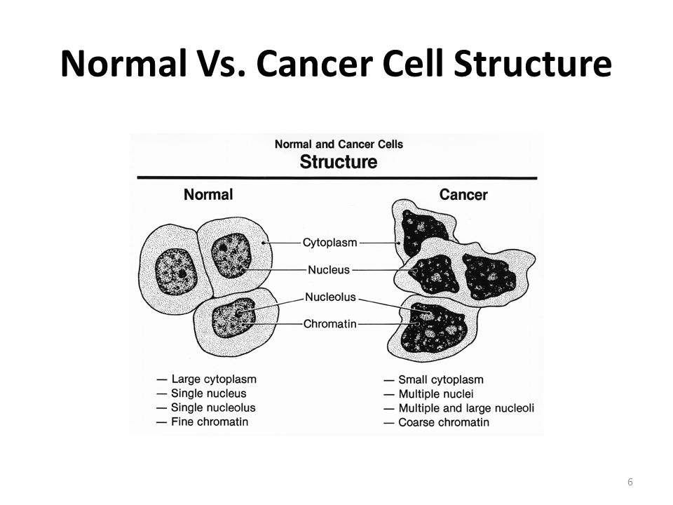 Cancer A Disease of Mitosis. - ppt download