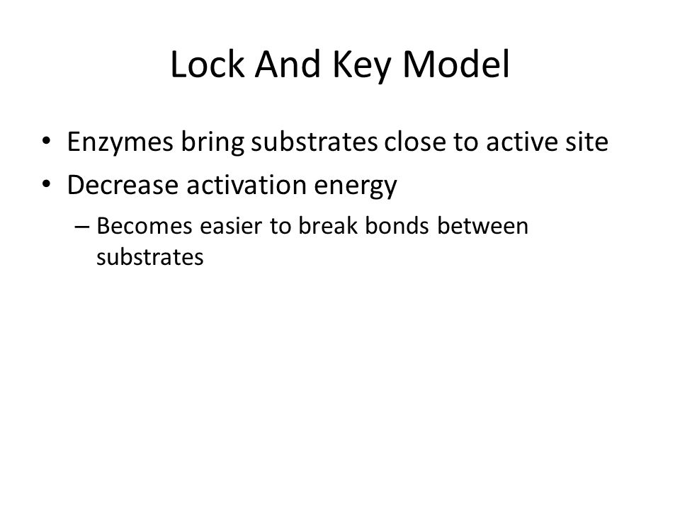 Lock And Key Model Enzymes bring substrates close to active site