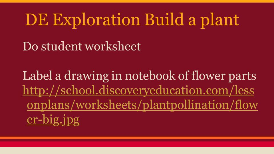 Photosynthesis Worksheet Elementary Pdf Flowering Plants L Summarize The Basic Structures And  Shading Fractions Worksheet with Worksheets For Nursery Pdf Do Student Worksheet Label A Drawing In Notebook Of Flower Parts De  Exploration Build A Plant The Ransom Of Red Chief Worksheets