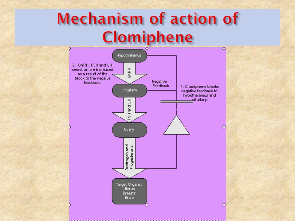 Action of clomid