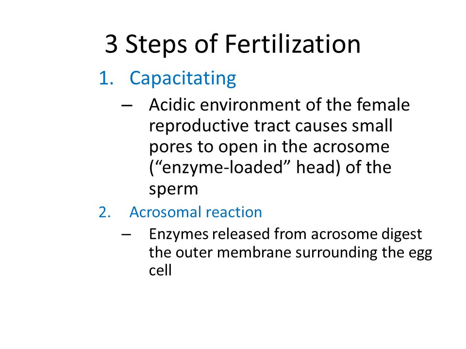 reaction about human reproduction This leukocytic reaction is caused by the spermatozoa because it was not observed when sperm-free seminal plasma was used the authors argued that it was a physiological reaction as it occurred even during cycles when subjects became.