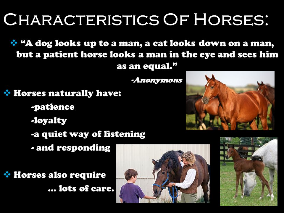 Equine Therapy For Children With Disabilities - ppt video ...