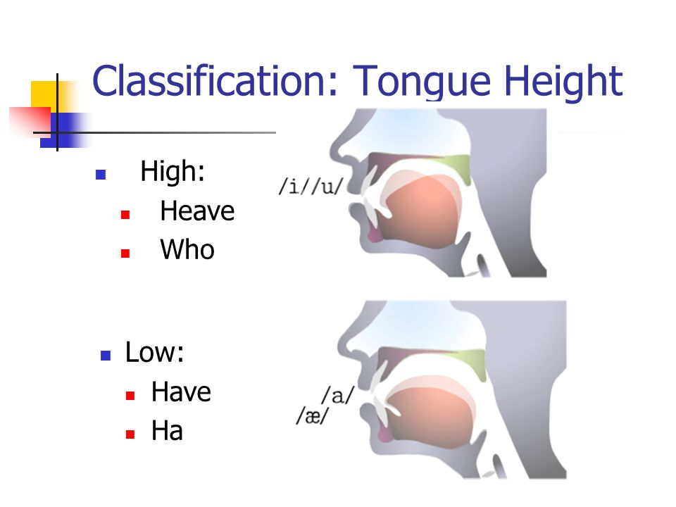 Classification: Tongue Height