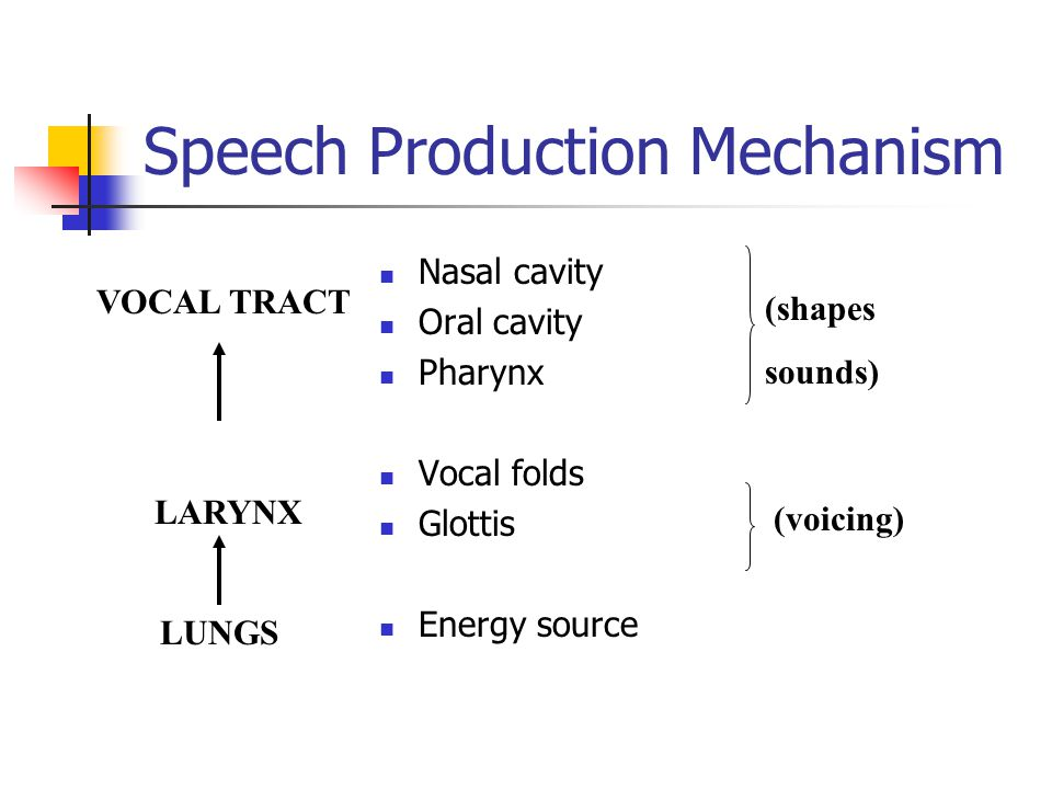 Speech Production Mechanism