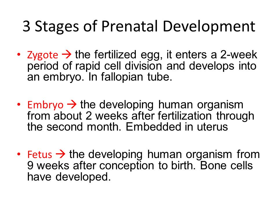 stages of human development pdf