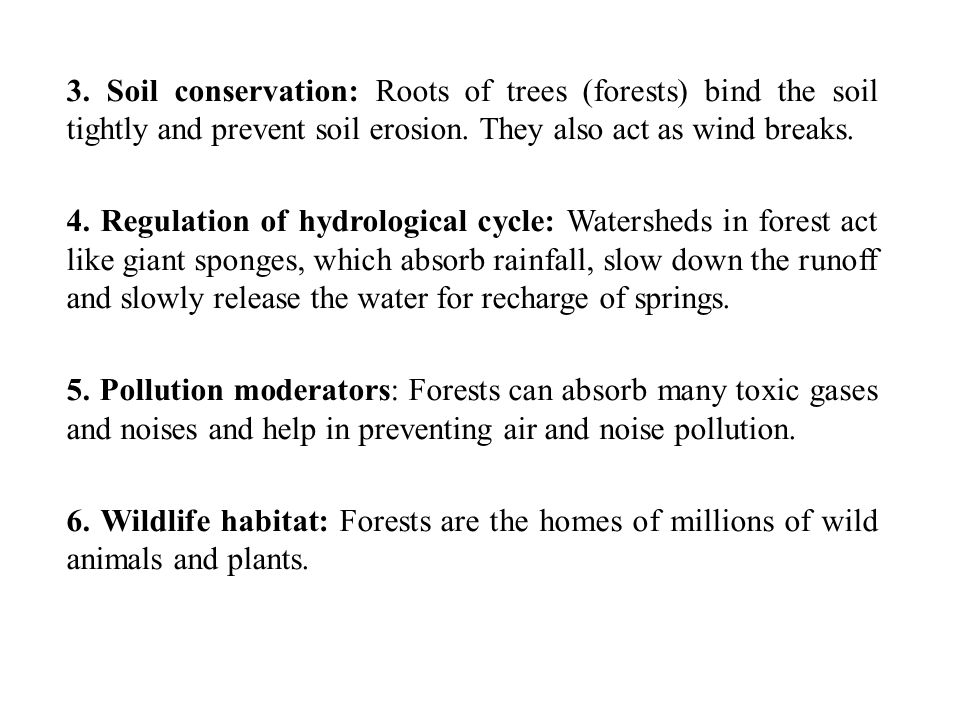 Environmental Benefits of Pine Trees