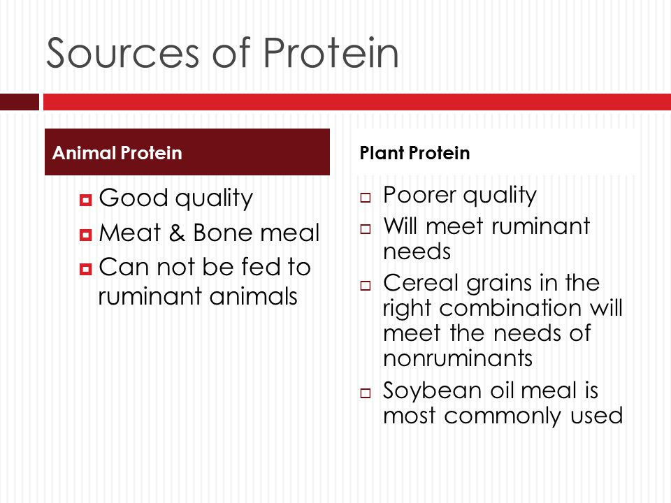 Sources of Protein Good quality Meat & Bone meal