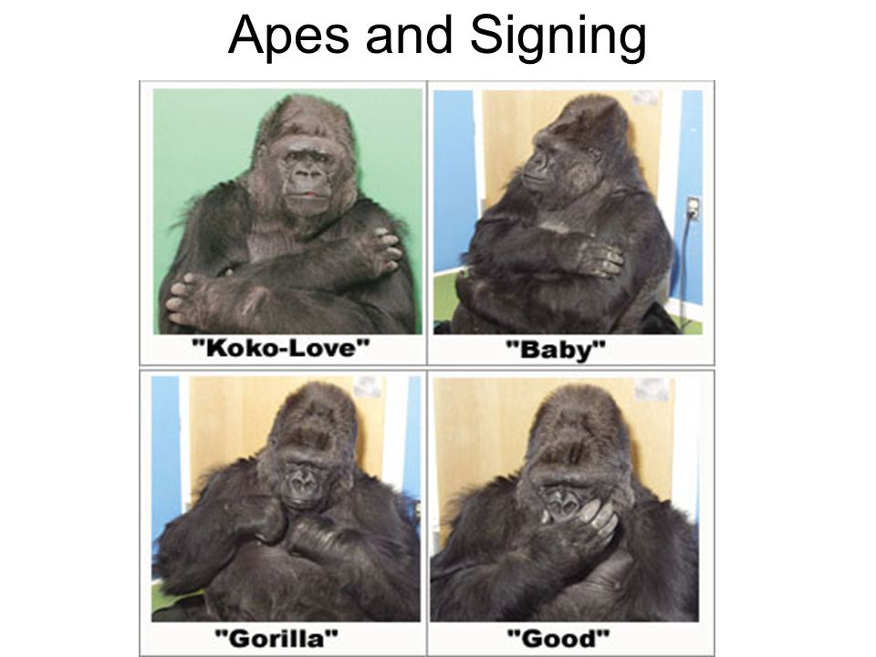 Apes and Signing