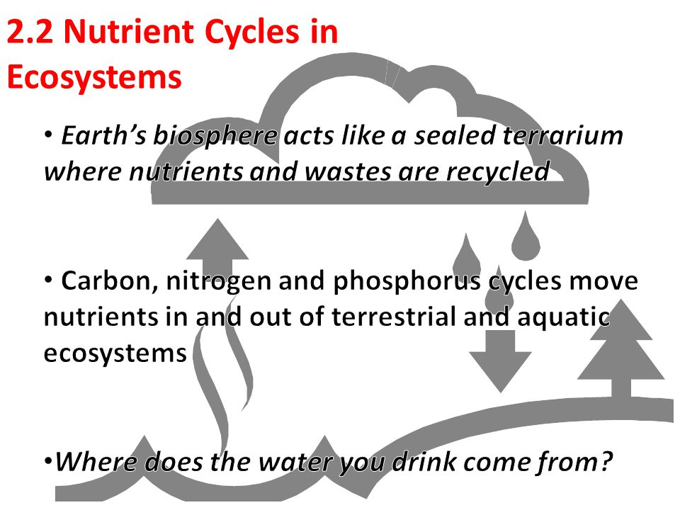 discuss how humans impact each cycle carbon phosphorus and nitrogen Product life cycle assignment - 30 60 carbon cycle 3 nitrogen cycle 4 phosphorus at least one intervention for each environmental yes impact not yet.