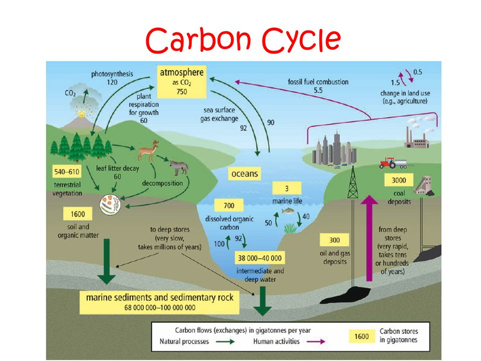 chapter 2  energy flow and nutrient cycles support life in ecosystems