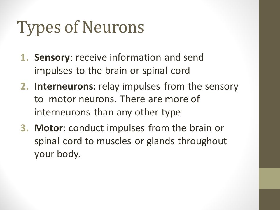 Types of Neurons Sensory: receive information and send impulses to the brain or spinal cord.