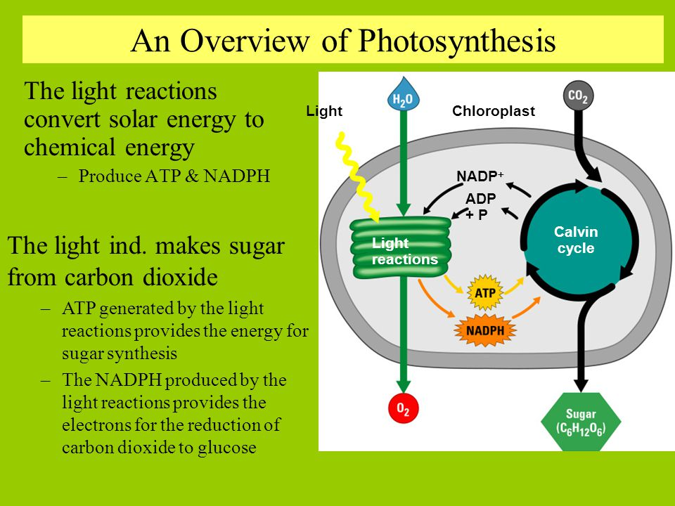 Putting photosynthesis into context