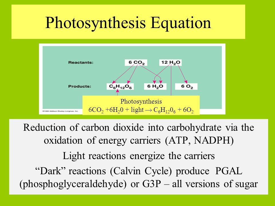 photosysthesis equation Photosynthesis is the process of transforming sunlight into chemical energy by storing it in the bonds of glucose or sugar this process occurs in plants, bacteria and some protists, or algae to produce sugar as food.