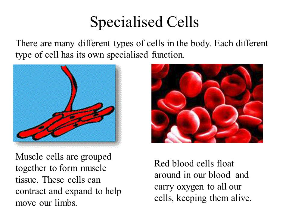 different types of cells This article describes the characteristics, function and location of the various  types of cells in the human body learn this topic now at kenhub.