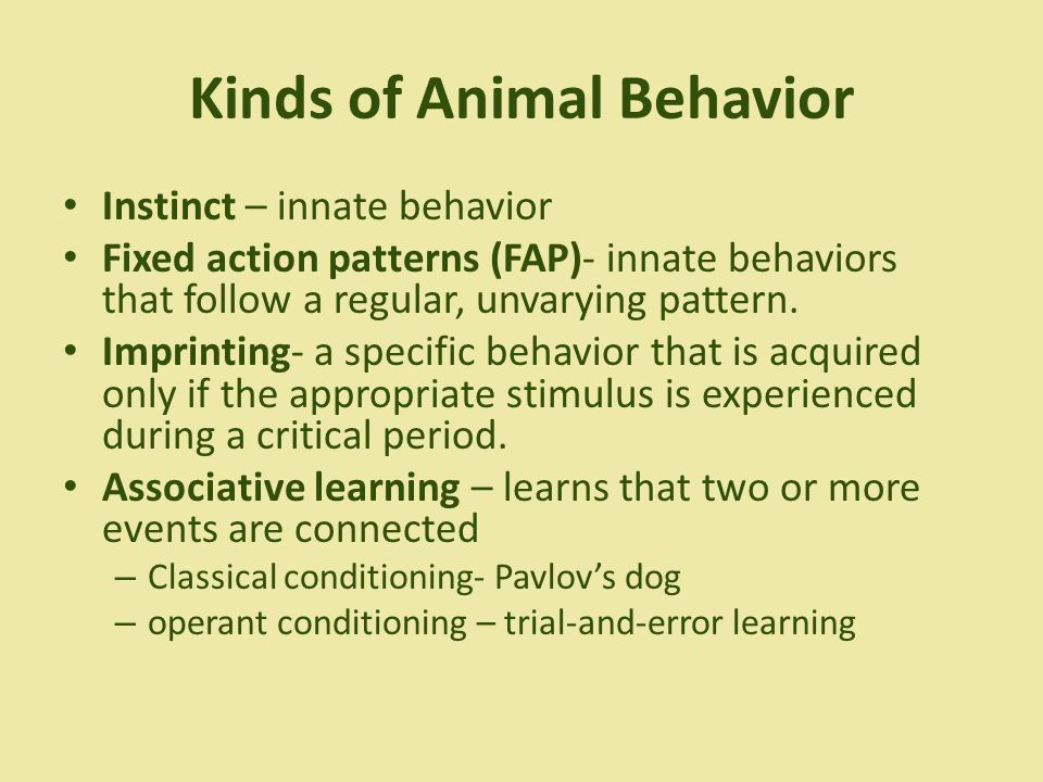 patterns of behaviour in animals pdf