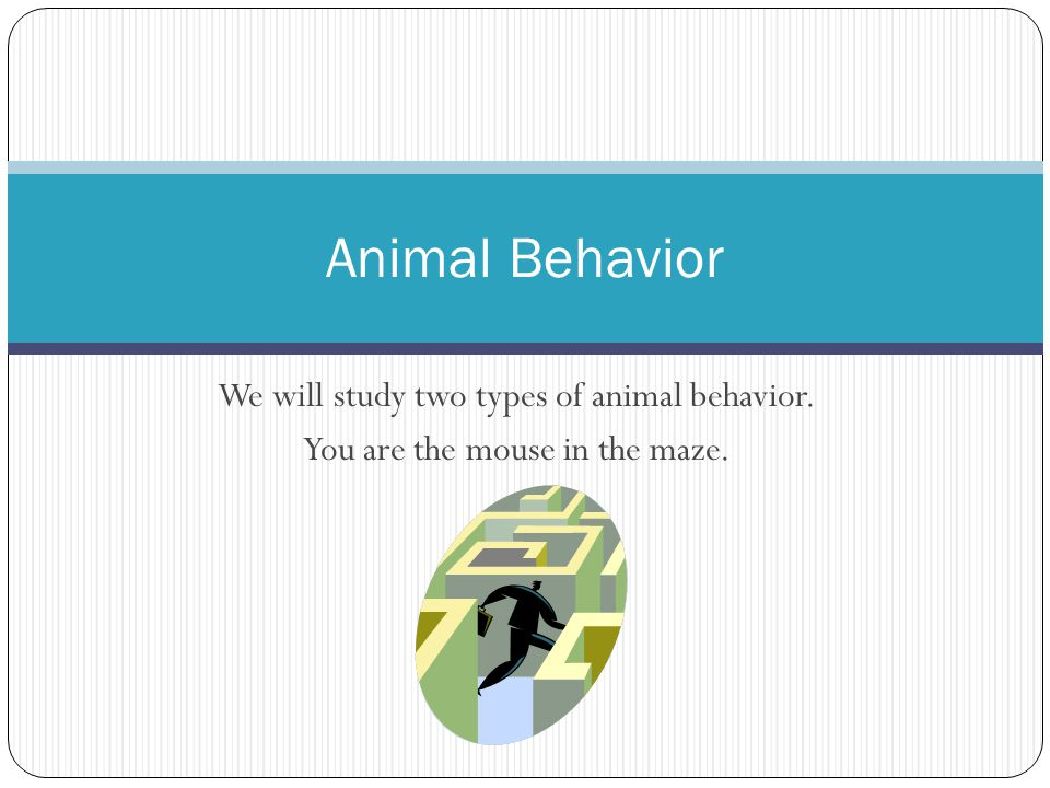 Animal Behavior We will study two types of animal behavior.