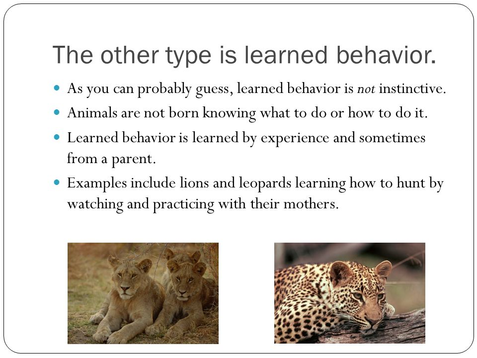 The other type is learned behavior.