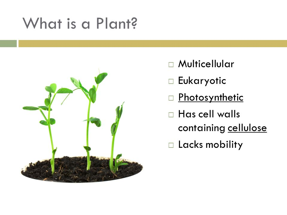 What is a Plant Multicellular Eukaryotic Photosynthetic