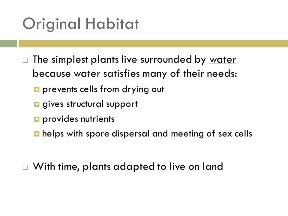 Original Habitat The simplest plants live surrounded by water because water satisfies many of their needs: