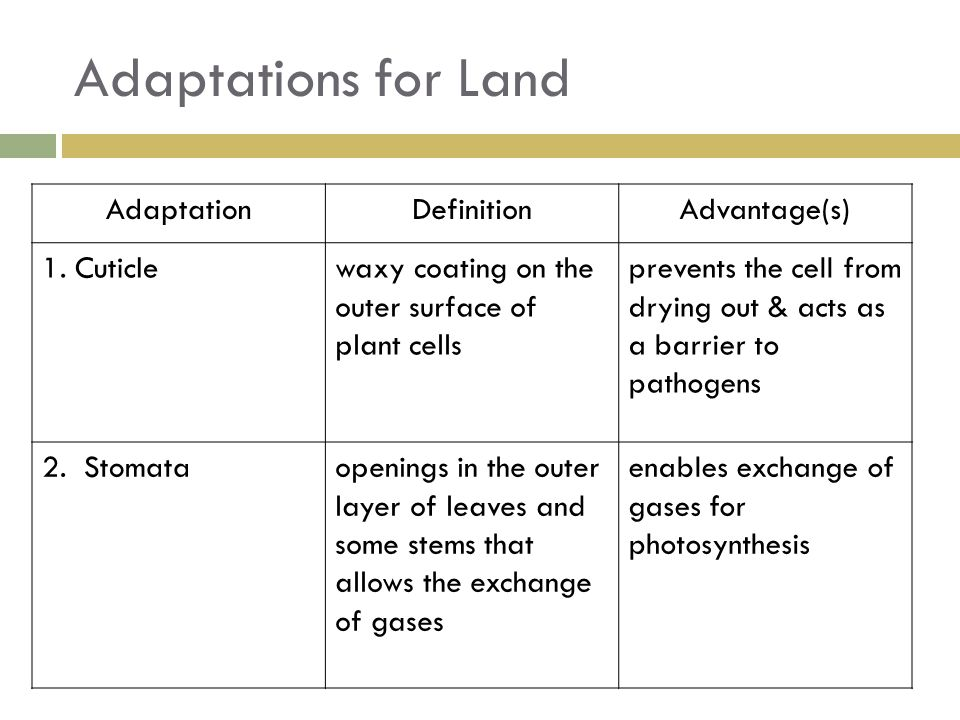 Adaptations for Land Adaptation Definition Advantage(s) 1. Cuticle
