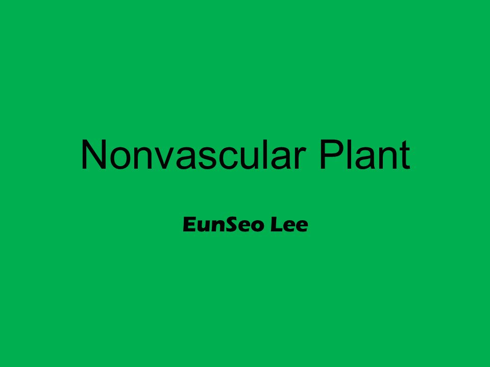 Nonvascular Plant EunSeo Lee