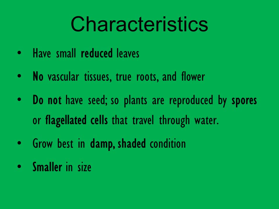 Characteristics Have small reduced leaves