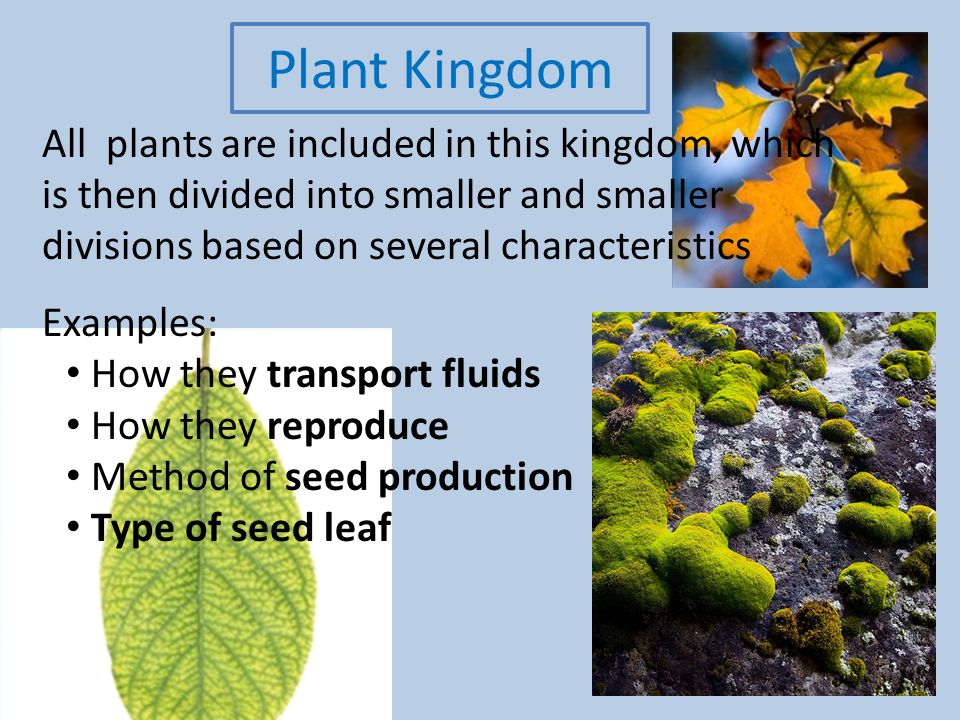 Plant Kingdom All plants are included in this kingdom, which is ...