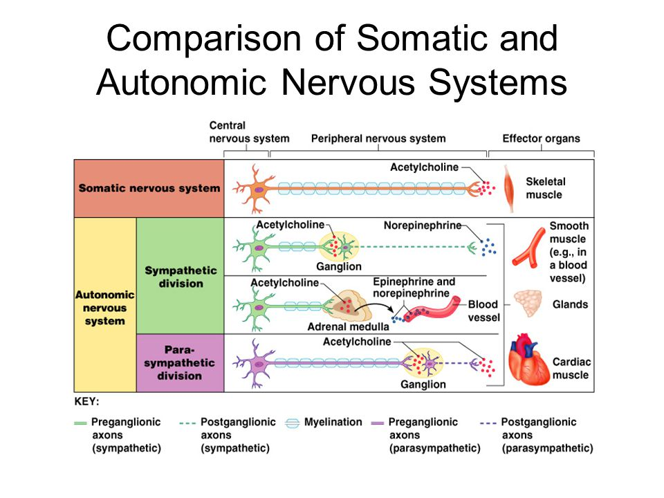 Nervous System Master controller and communicating system ...  Autonomic