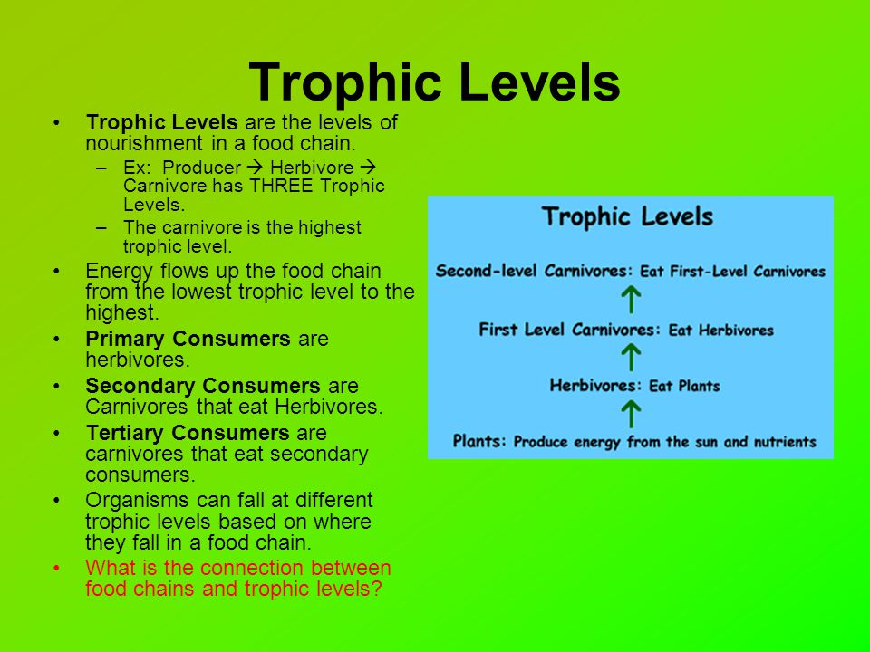 what is the relationship between three trophic levels