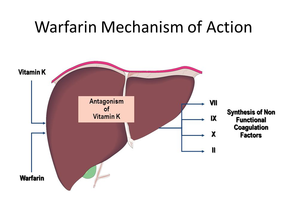 mechanism of action of warfarin biology essay Barbiturate mechanism download pdf copy  mechanism of action the primary mechanism of action of barbiturates is inhibition of.