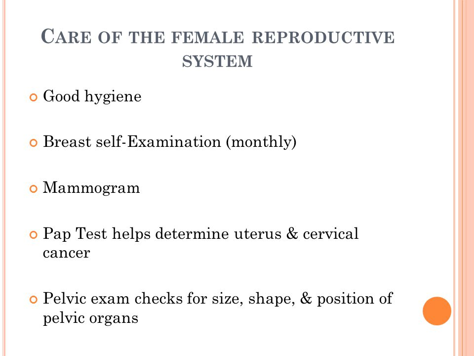 the female reproductive system - ppt download, Muscles