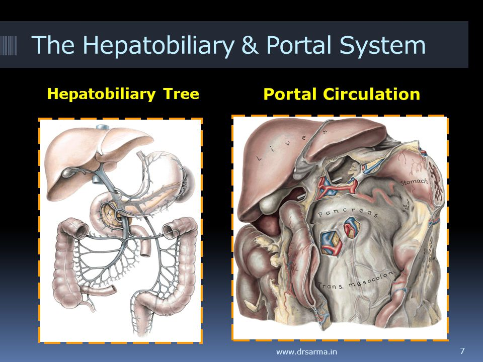 The Hepatobiliary & Portal System