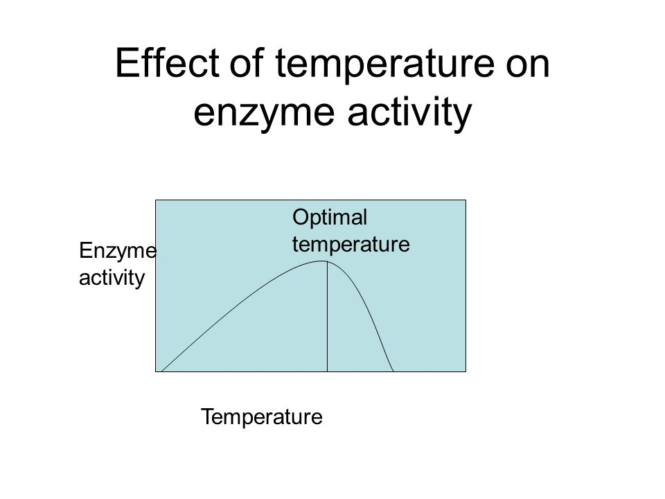 effect of temperature on an enzyme The effects of temperature on enzyme activity the correlation of ph doesn't seem as clear test tubes 2 and 3, which contained ph 5 and 6 starch, completed the reaction at the same time figure 2 shows the reaction rates of the different ph levels maltose was present in all test tubes.