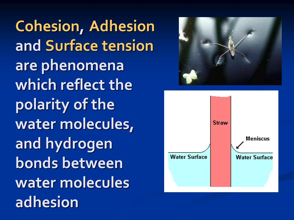 Adhesion Definition Water Water Ionizer