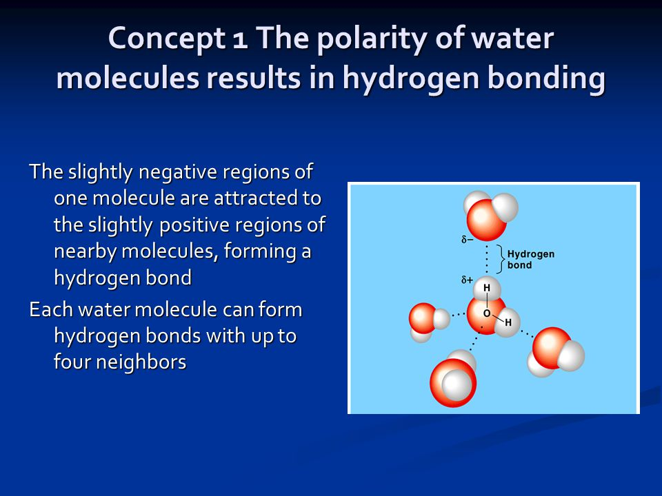How many bonds can hydrogen form - answers.com